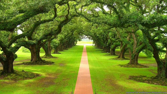 Beautiful-orderly-path